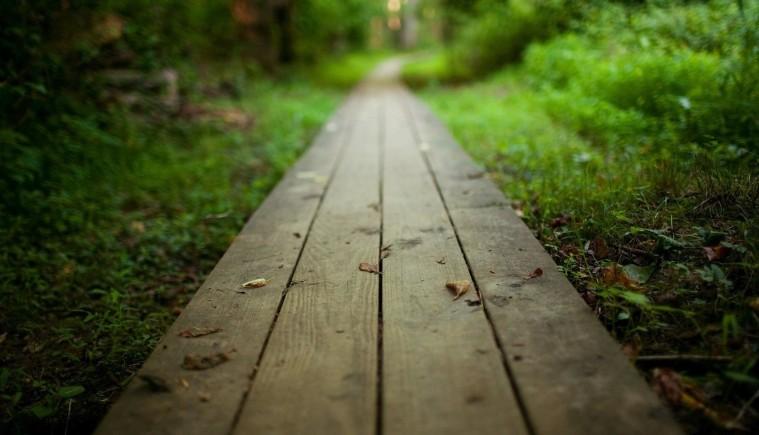 caminho-no-bosque-wallpaper